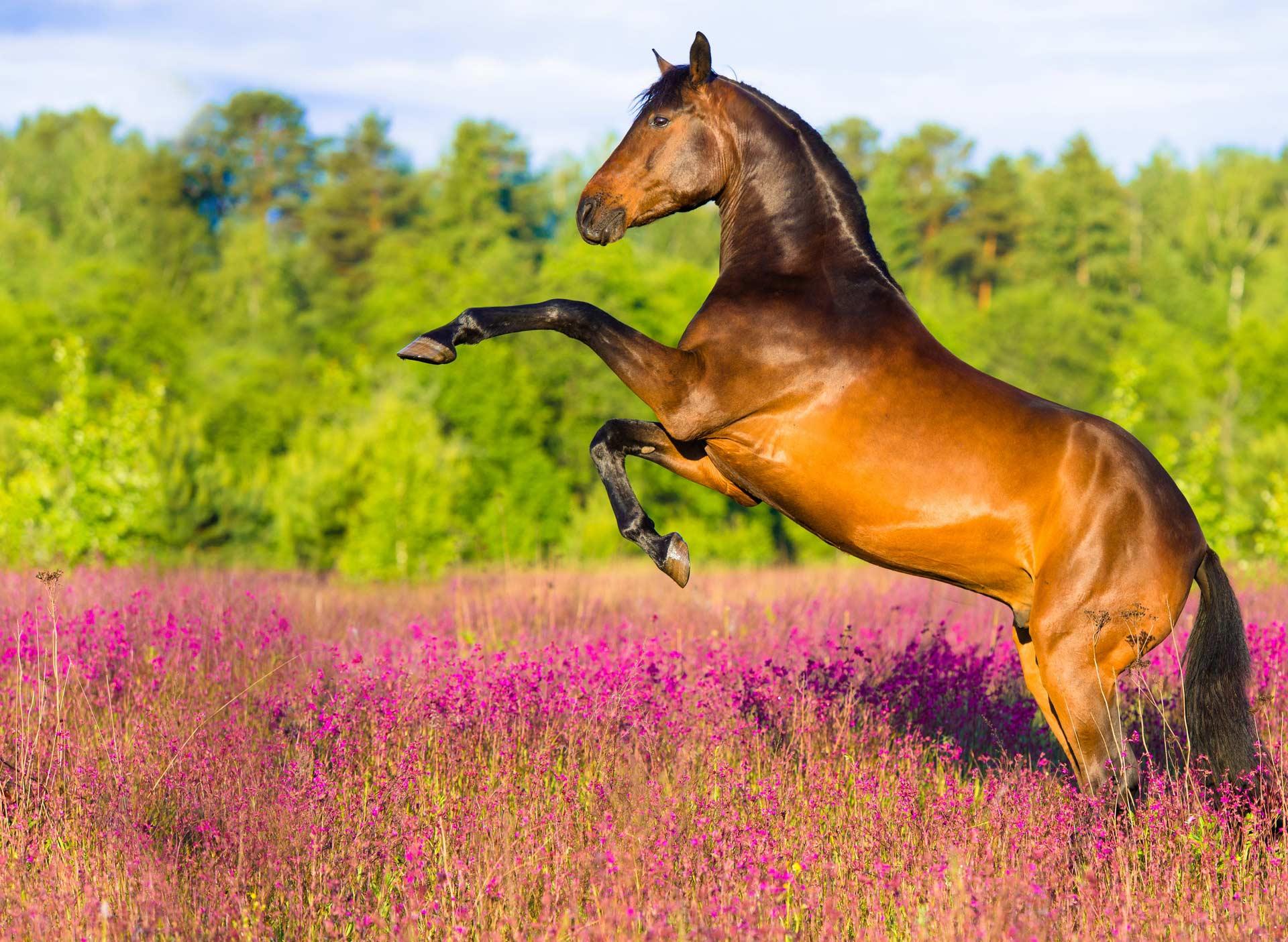 Книги о воспитании лошадей скачать