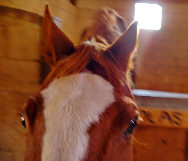 для женщина лошадь как завоевывать условиях повышенной