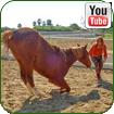 Смотреть нас в YouTube
