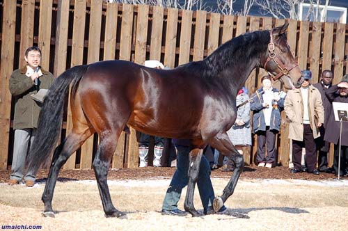 Самая дорогая лошадь в мире