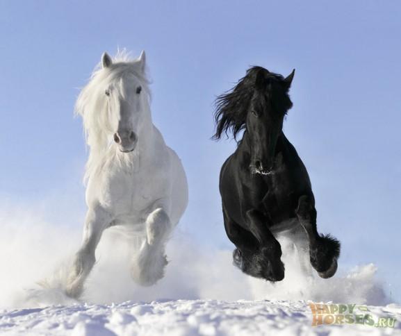 Лошади - это ...