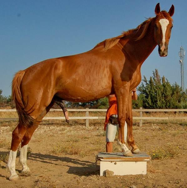 Воспитать лошадь