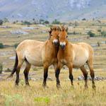 Лошади в дикой природе