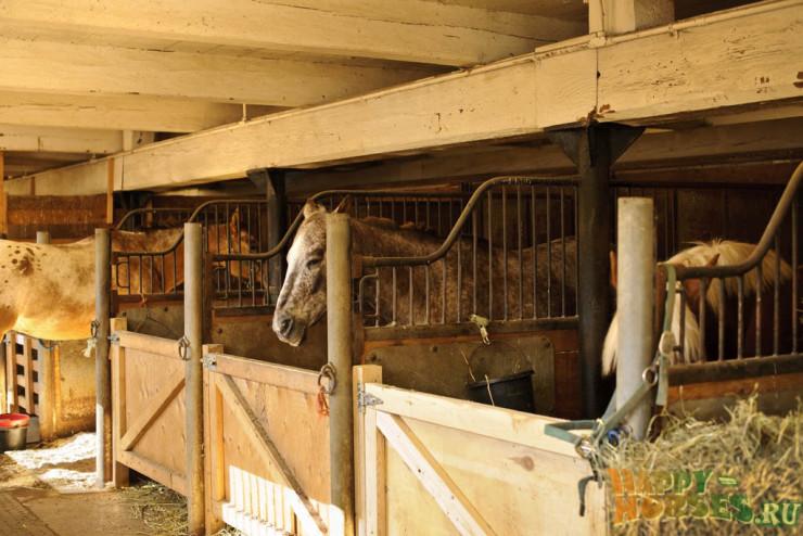 Денник для лошади