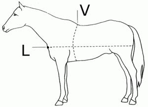 Определение веса лошади по промерам