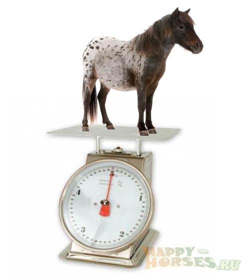 7 способов определить вес лошади
