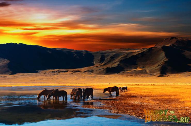 Табун лошадей на водопое