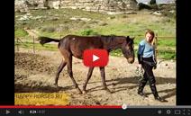 Бесплатный видеокурс по воспитанию лошади. Ю. Худякова