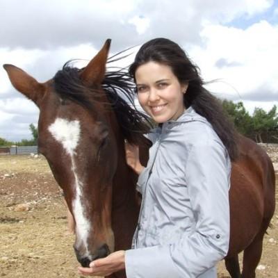 как начать знакомство с лошадьми