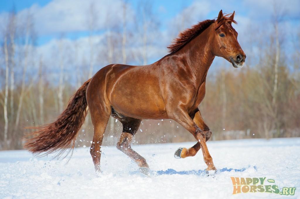 лошадь картинки