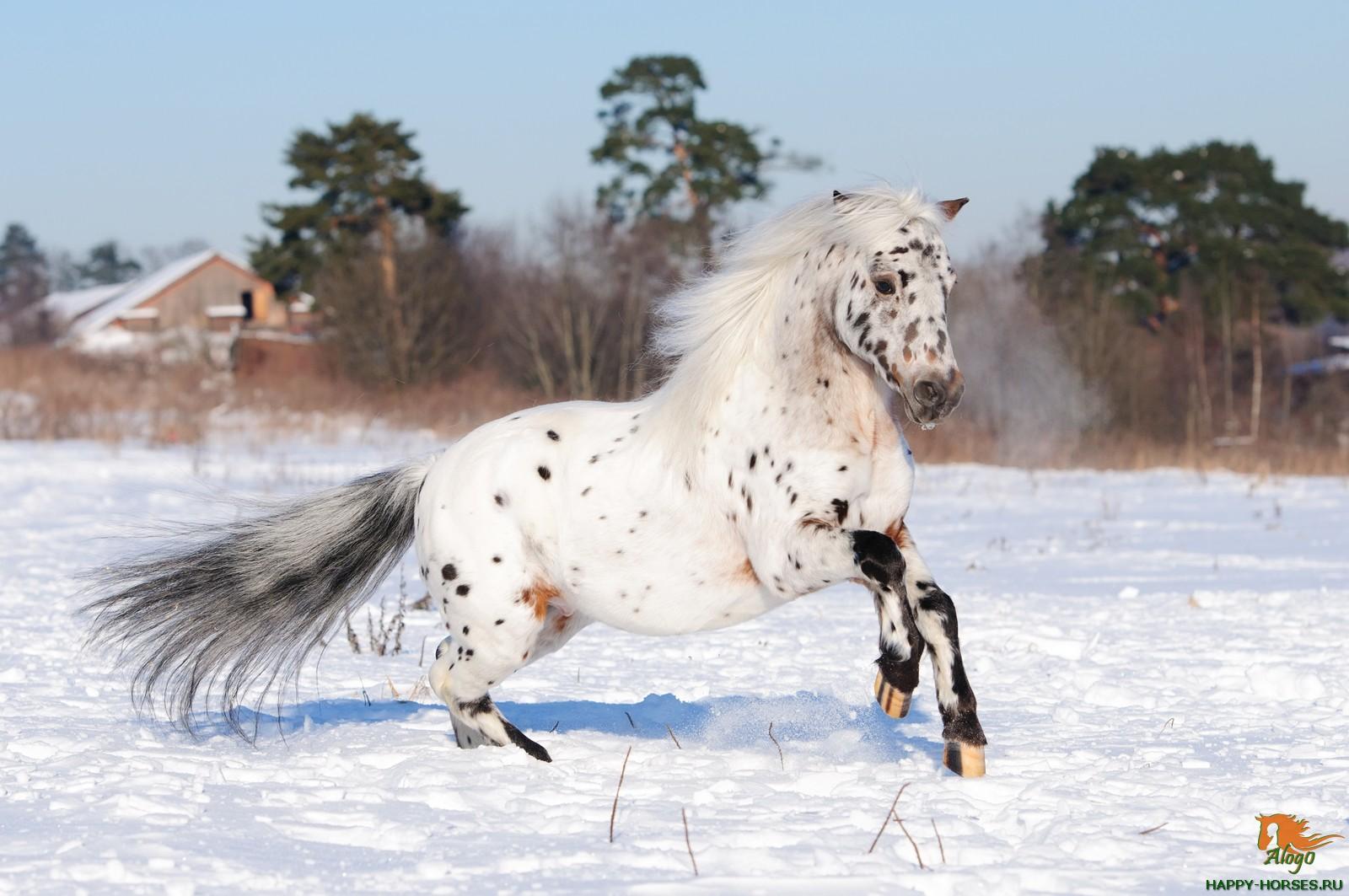 Фото о лошадях