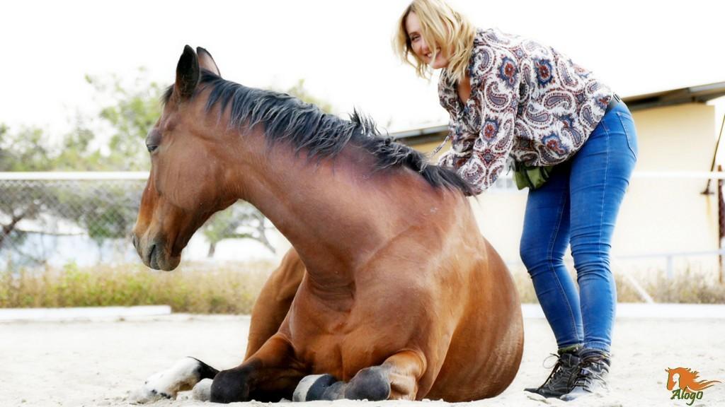 инструкции кормление скаковых лошадей перед скачкой