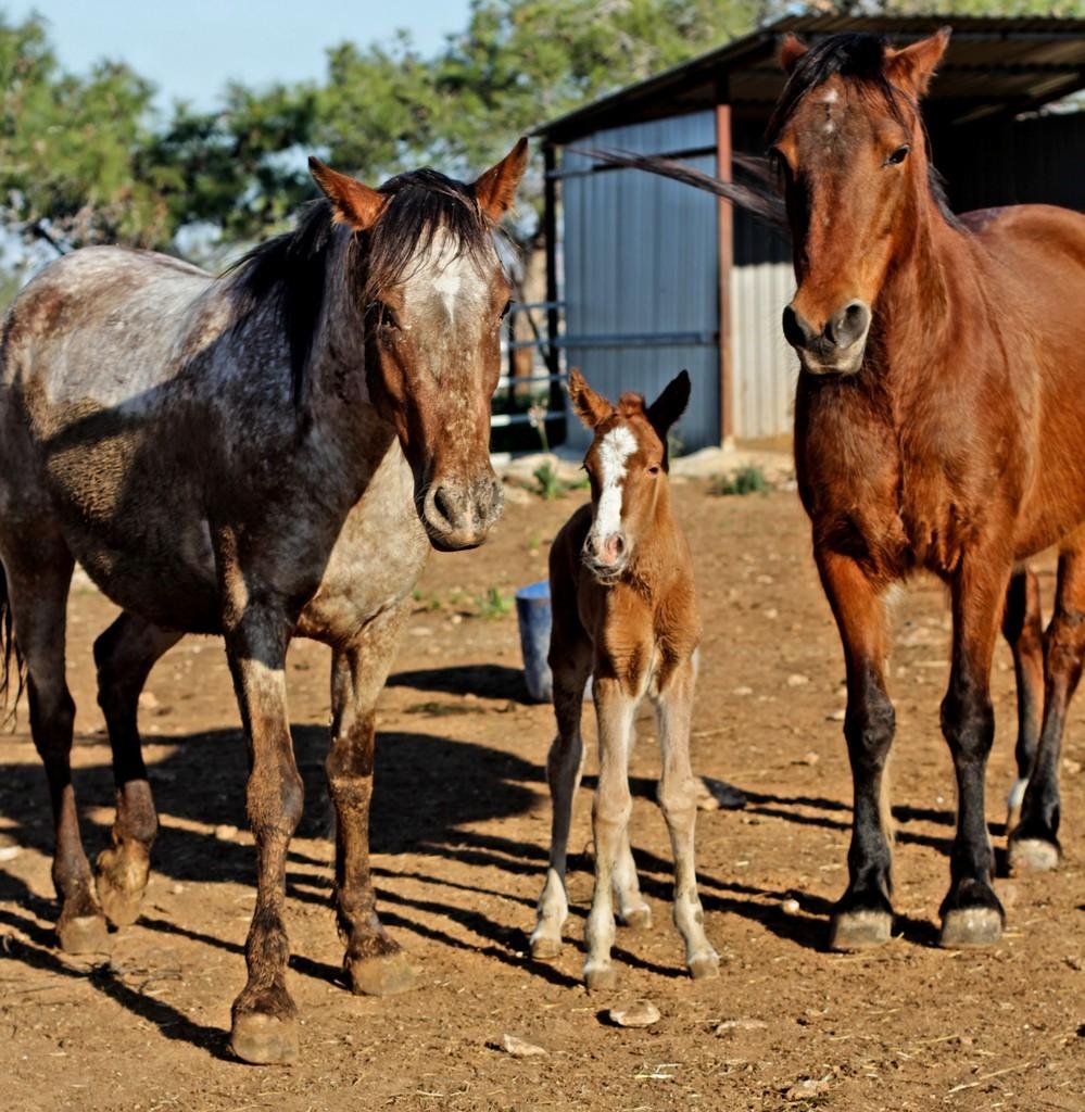Мама Натали (слева), Мария новорожденная в центре и опекунша бабушка Ферулла :)