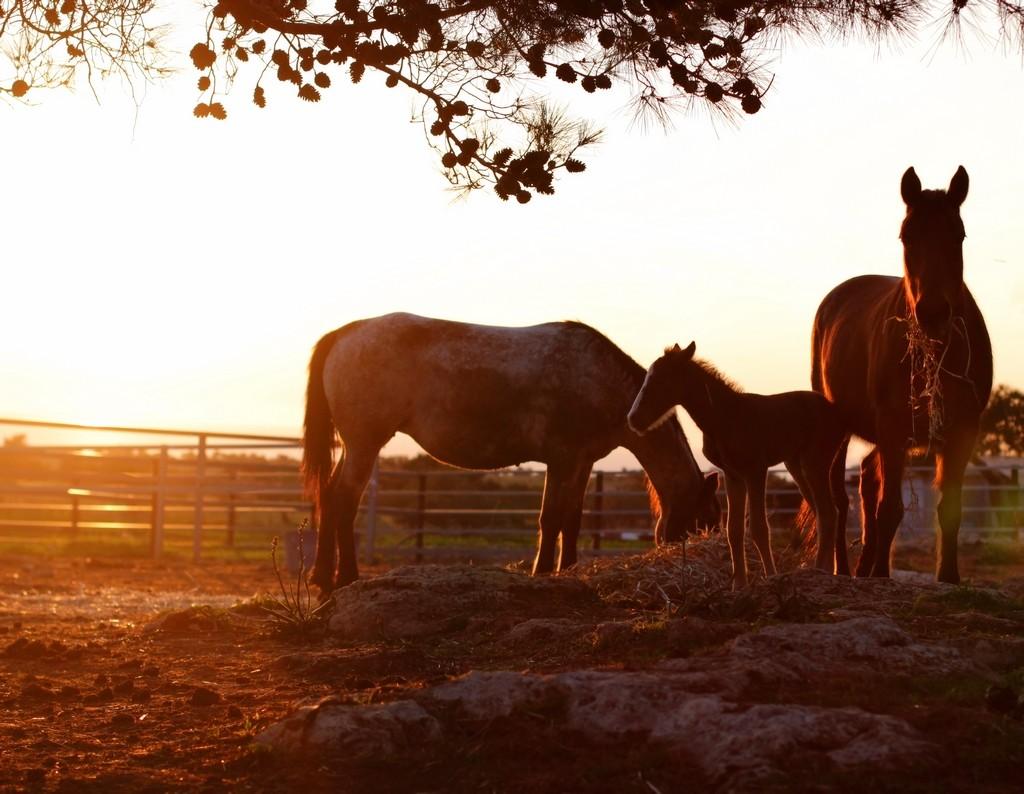 Первый закат в жизни под оберегом бабушки Феруллы... Фотография Павла Ермилова