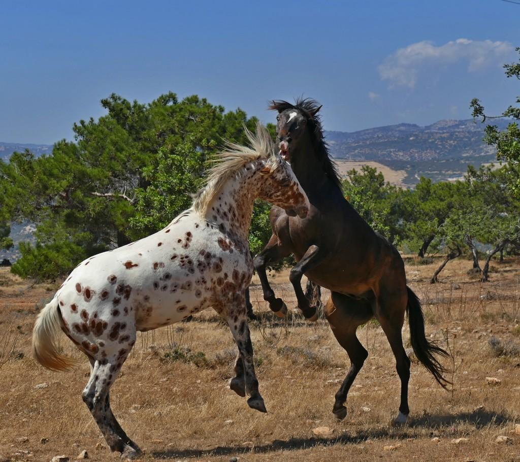 наблюдать за 17-ю лошадьми в табуне!