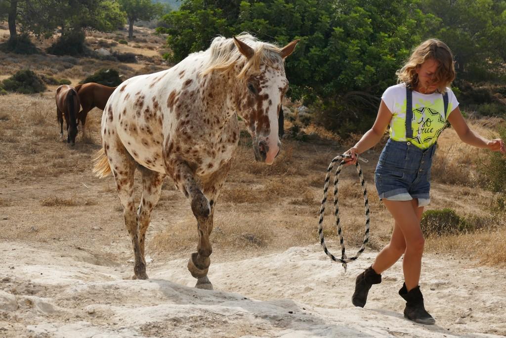 Потому что Вы сможете на семинаре работать не с одной, а с пятью лошадьми!
