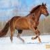 Буденовец. Буденновская порода лошадей (фото, описание, история породы).