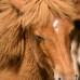 Как справиться с испугом лошади