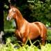 Дончак. Донская порода лошадей
