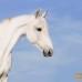 Орловский рысак. Лошадь орловской породы.