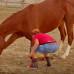 Как научить лошадь поклону на запястье. Подготовка.