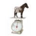 7 способов определения веса лошади