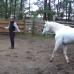Видео. Почему лошадь отбила и в чем ошибка?