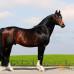 Тракены. Тракененская порода лошадей