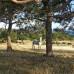 Лето с лошадьми на Кипре, горящее предложение, приезжайте!