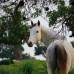 "Майский семинар ""В гармонии с лошадью"" на Кипре!"
