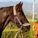 Бить или не бить лошадь? Вот в чем вопрос…