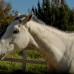 10 способов общения с лошадью.