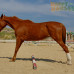 Что такое трапеция? Как научить лошадь трапеции?