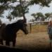 Борьба или мир? Как не спорить с лошадью?