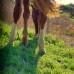 Боюсь лошадь. Что делать? Страх или доверие?