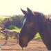Дисциплина. Что делать, если лошадь на грани взрыва?