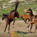 Мера лошадиного терпения или почему лошади взрываются и что делать?