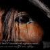 Не стоит обижаться на агрессивную лошадь