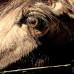 У лошадей очень хорошая память…