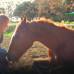 Когда попадаешь в мир лошадей, время начинает течь совсем по-другому.
