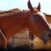 Любовь или зарплата? Что такое лакомство для лошади?