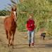 Что важнее лидерство или дружба с лошадью?