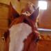 Как завоевать доверие лошади?