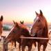 Лошади – это навсегда!