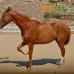 Шапп. Как научить лошадь давать ногу?